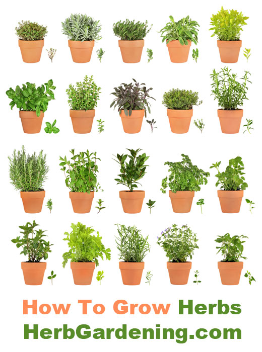 herb gardens  how to grow herbs indoors and out, Beautiful flower