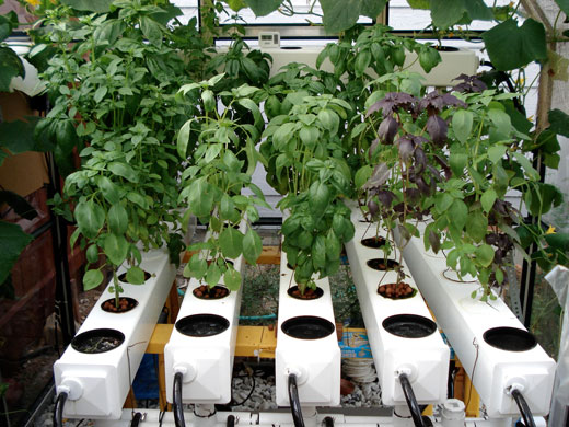 How To Grow Herbs in Hydroponics Herb Gardening Guide