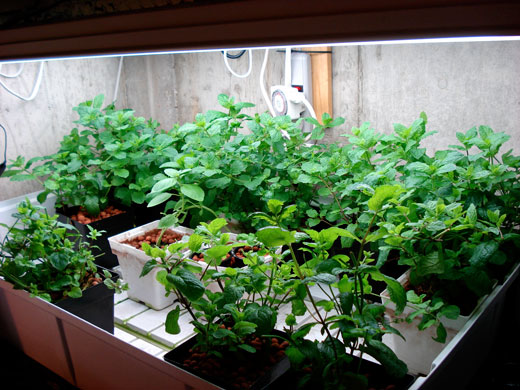 How To Grow Herbs Indoors Herb Gardening Guide