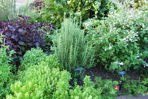 herb gardens  how to grow herbs indoors and out, Natural flower