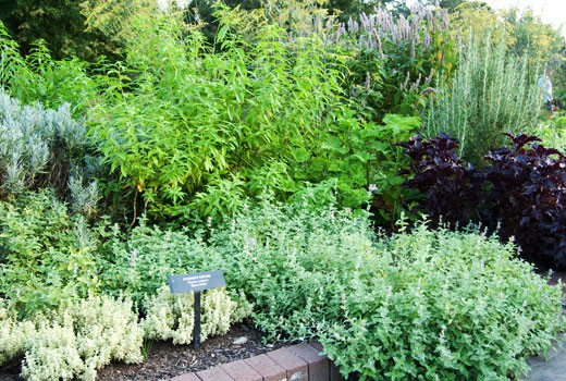 a ten top for garden the herb herbs of eaden