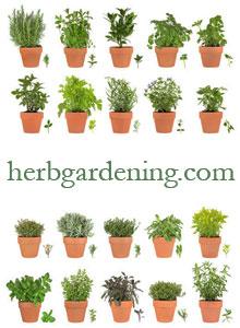 how to herbal garden