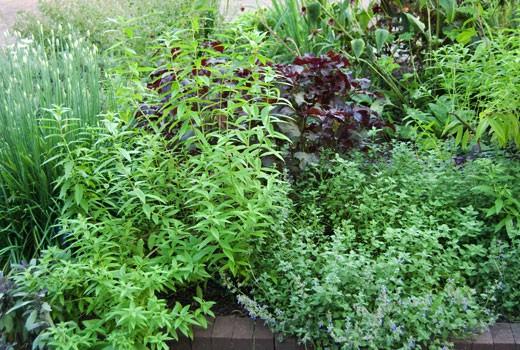 Garden Grow Your Own Herbs